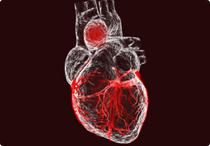 Waspada Miokarditis, Jantung yang Meradang